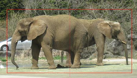 サファリパーク(象)